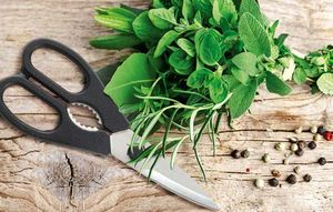 Using a knife that is not sharp enough can crush the fibers in the herbs